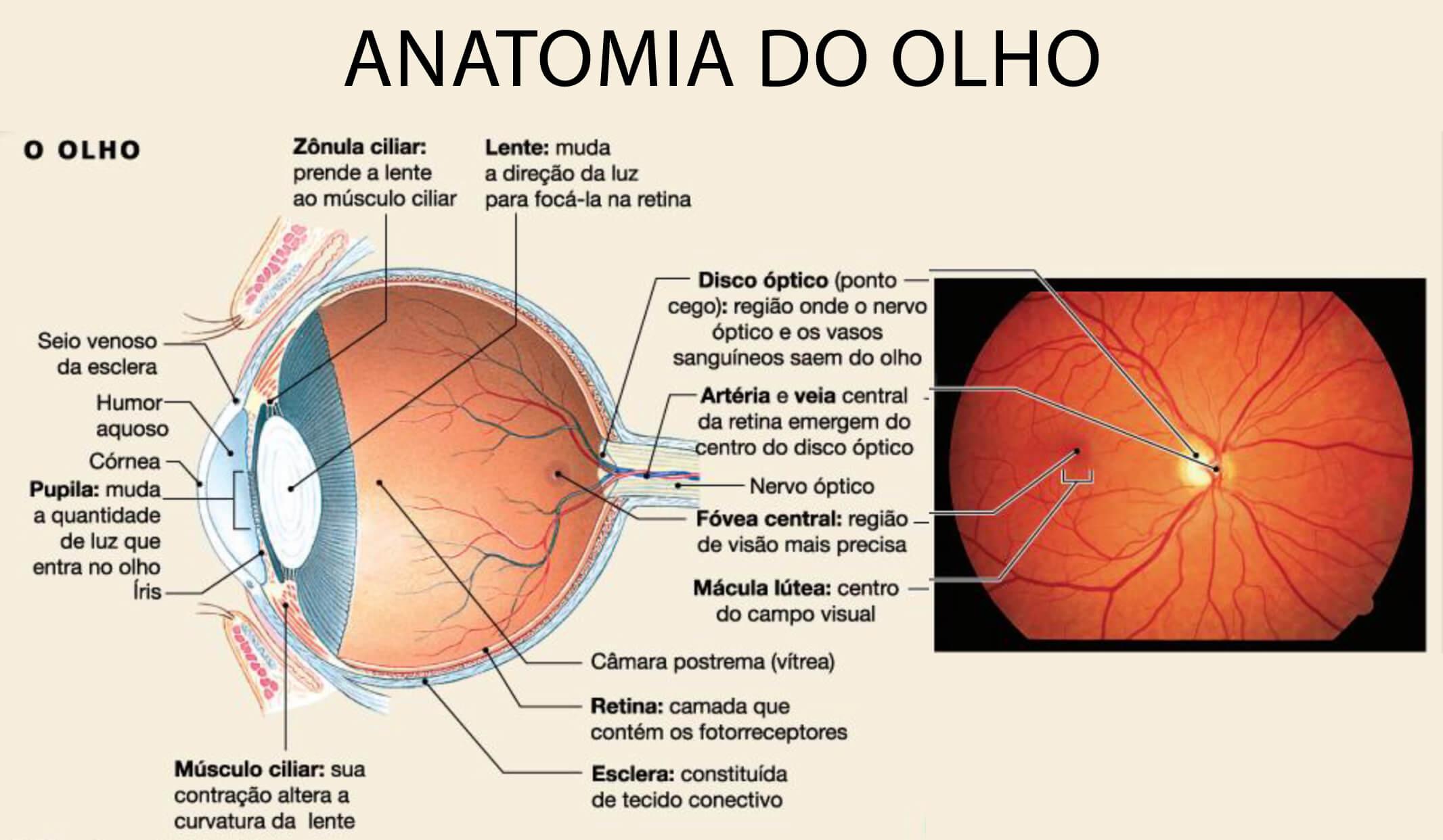 Você conhece as principais estruturas do nosso olho?